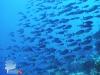 20011209_SPABUN065_Pisok_Incornfish_640
