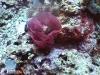 Nudibranch's Egg