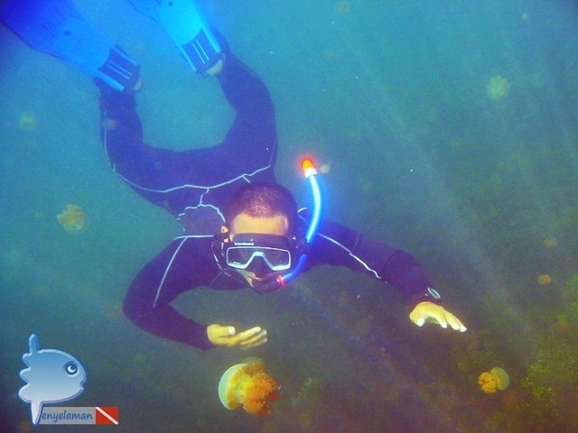Jellyfish Expert