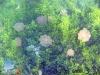 The Stingless Jellyfish