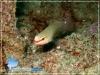 Halmahera Fish