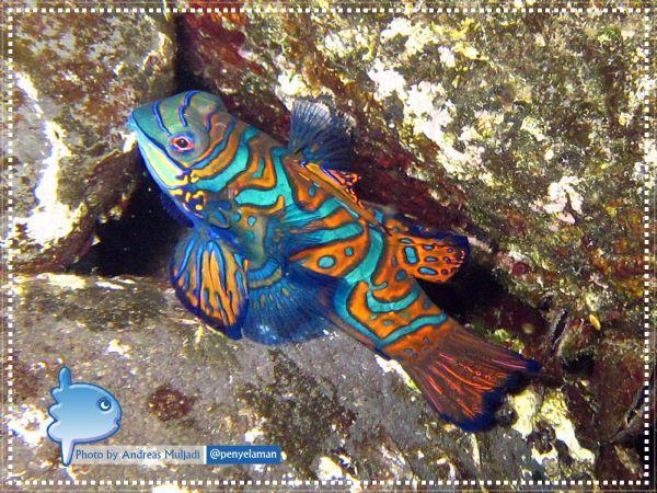 Ikan Barongsai