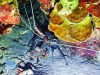 Udang Lobster not food