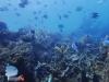 Healthy Reef