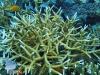 Bleaching Coral