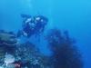 Discovering Underwater