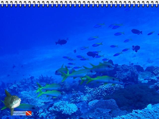 Ikan Biji Nangka