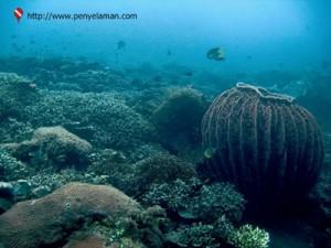 Terumbu karang di Taman Segara