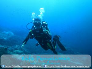 Menjelajah Dunia Bawah Laut