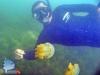 Diver and Stingless Jellyfish