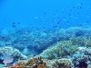 The Healthy Resillience Reef
