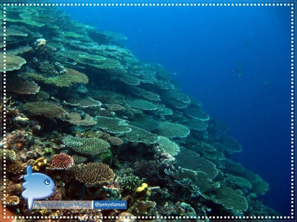 Recovered Reef
