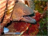 Shrimp on Moray Eel