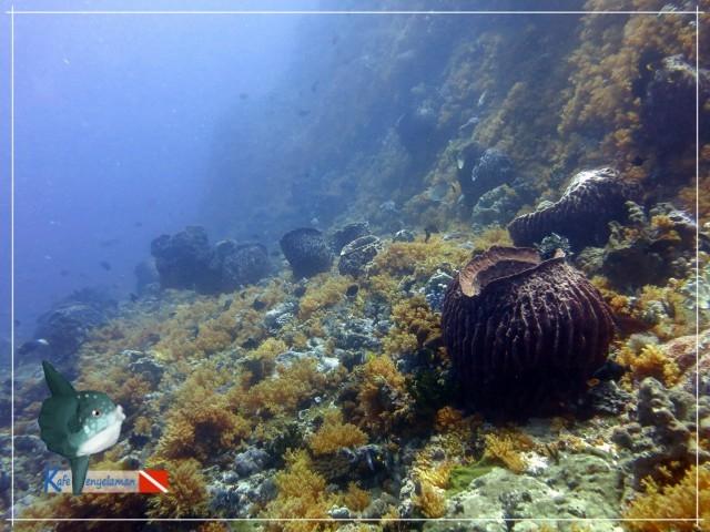 Terumbu karang pulau Batek