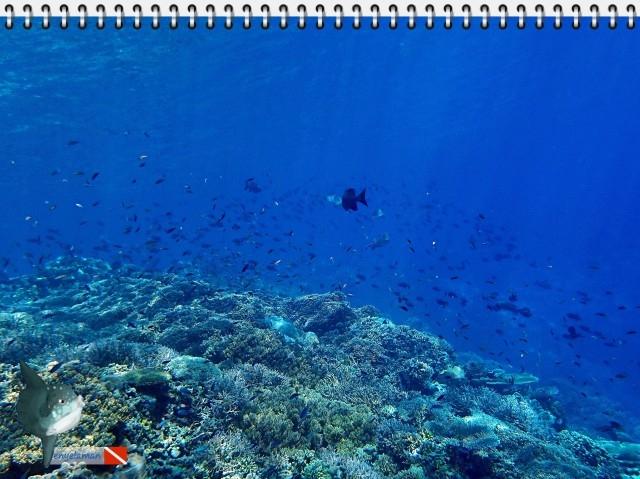 Ikan karang berenang menari diatas terumbu