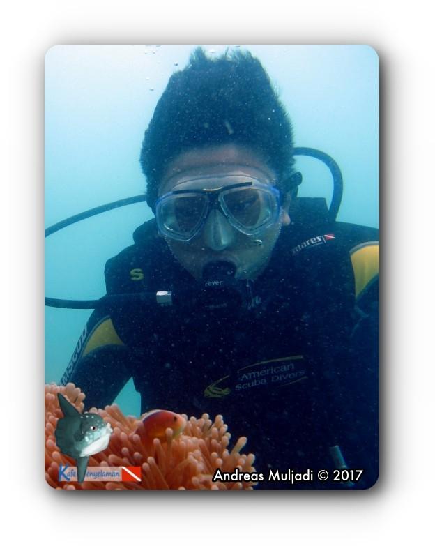 Watching Underwater Life : Sea Anemone