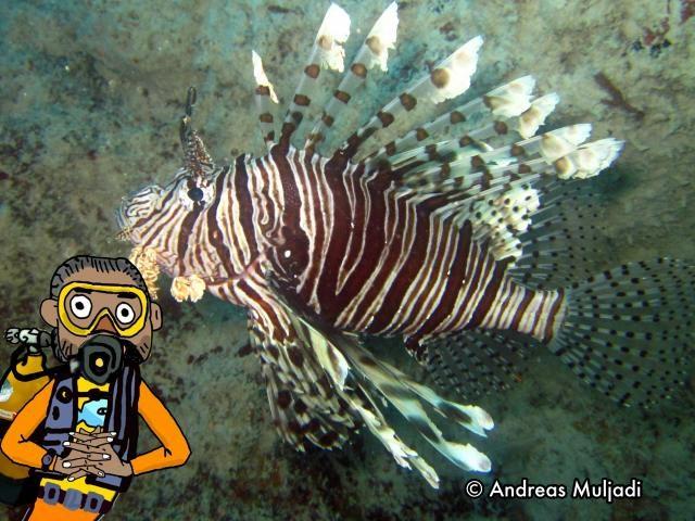 Isyarat Tangan - Ikan Lepu Ayam (Lionfish)
