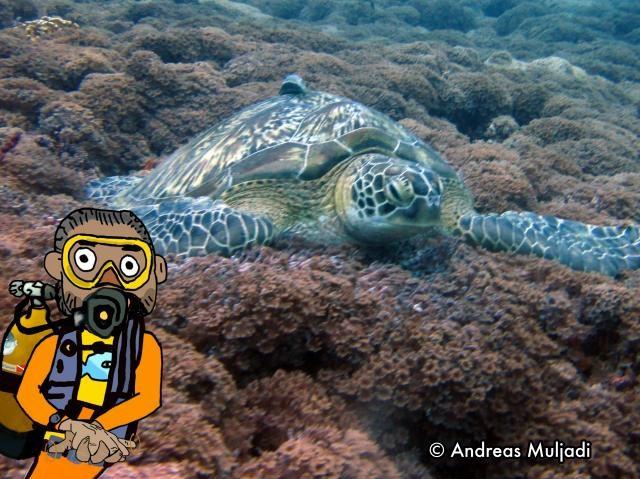 Isyarat Tangan - Penyu Laut  (Sea Turtle)