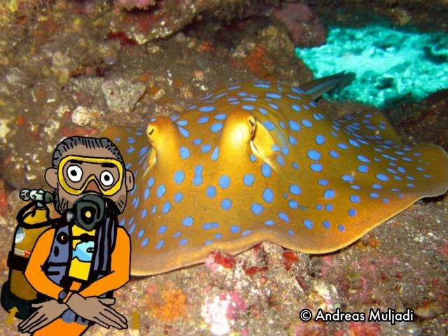 Isyarat Tangan - Ikan Pari (Stingray)