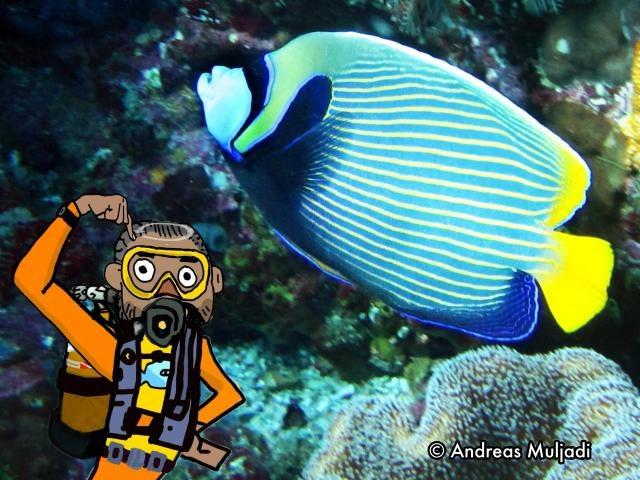 Isyarat Tangan - Ikan Bidadari (Angelfish)
