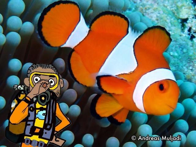 Isyarat Tangan - Ikan Nemo/ Badut (Clownfish)