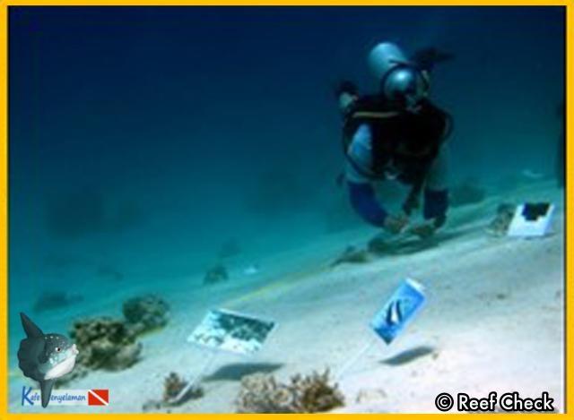 Ecodiver Course Seribu island