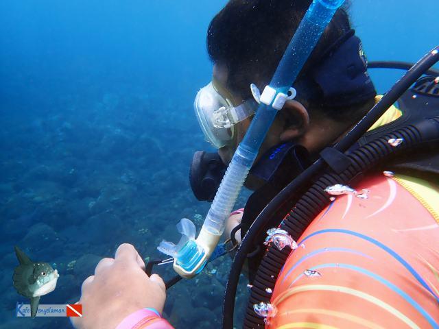 Gladden menyelam di laut