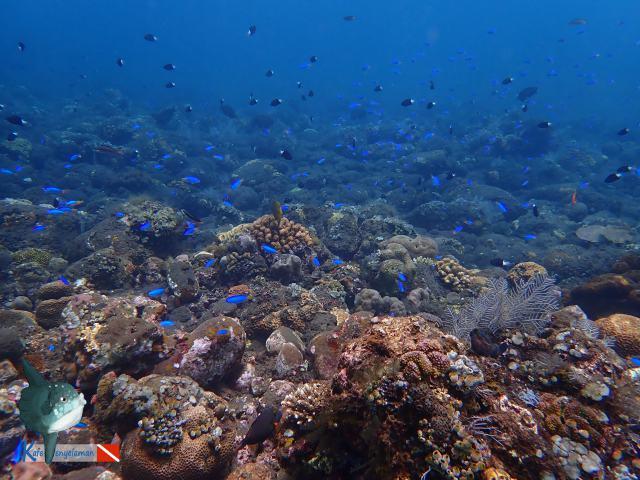Warna-warni ikan karang
