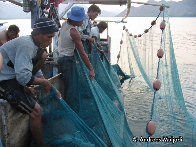Jaring Cincin untuk menangkap ikan Roa