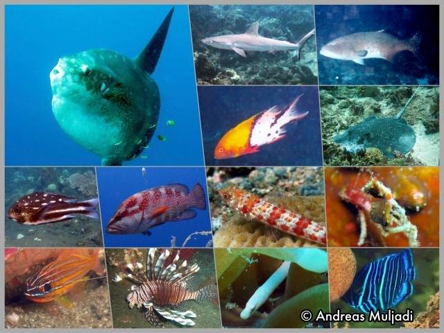 Jenis-jenis ikan