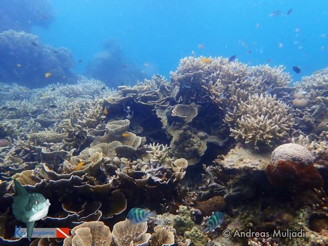 Biota Laut : Healthy Reef