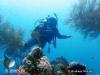 LPT : Marine Life  Black Coral