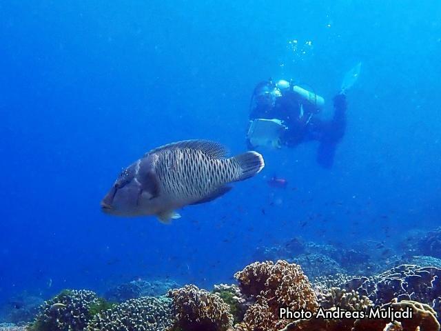 Pemantauan Ikan di kawasan konservasi