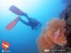 Penyelam Gorgonian dan Ikan Karang