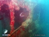 Bannerfish at MV Boelongan Wreck
