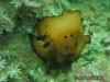 Martensi Seaslug