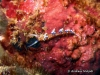 Caloria  Seaslug