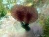Pink Puff Ball Sponge